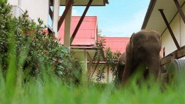 Elephant — Stock Video