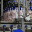 Poultry processing plant — Stock Video