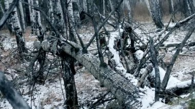 Old trees in winter forest — Vidéo