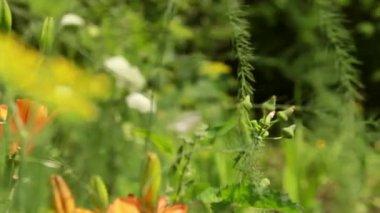 Flores no jardim — Vídeo Stock