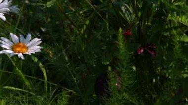 庭の花 — ストックビデオ