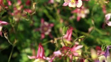 Flowers in the garden — Стоковое видео