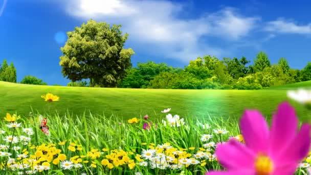 Flores y verdes prados — Vídeo de stock