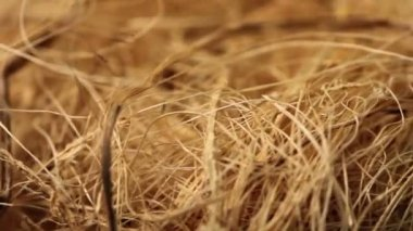Dry grass close up — Stock Video
