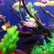 Colorful Coral fishes — Stock Video #45143099
