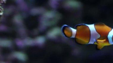 Aquarium fish — Stock Video