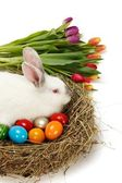 Easter bunny in nest with painted eggs — Stock Photo