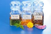 Olika växt extrakt i flaskor och homeopatiska läkemedel — Stockfoto