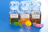 Various plant extract in bottles and homeopathic medication — Stockfoto