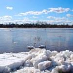 Birds and ice — Stock Photo #13779568