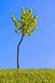 Tree on blue sky background — Stock Photo