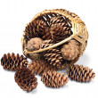 Cones in a wicker basket — Stock Photo