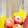 Apples and autumn maple leaves — Stock Photo #26497331