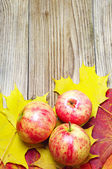 Apples and autumn maple leaves — Stock Photo