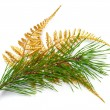 Christmas decoration with pine branches — Stock Photo