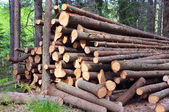伐採木のトランク — ストック写真