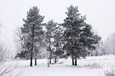 Albero nella neve — Foto Stock