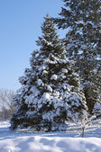 Tree in the snow — Stock fotografie
