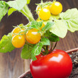 Red tomato and yellow cherry tomatoes — Stock Photo