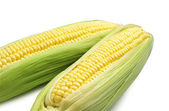 Raw corn closeup — Stock Photo