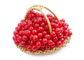 Sweet viburnum berry — Stock Photo