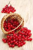 Berries of red viburnum in wicker basket — Foto de Stock