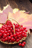 Red viburnum berry and autumn leaves — Stock Photo