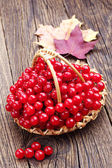 Viburnum berry in wicker basket — Stock Photo