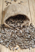 Sunflower seeds — Foto de Stock