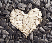 Background with sunflower seeds — Stock Photo