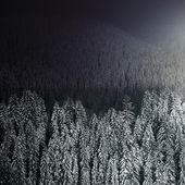 Foresta invernale bella di notte — Foto Stock