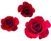 Une fleur de roses. — Photo
