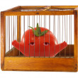 Tomato, prisoner in cage. — Stock Photo #20942327