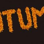 Autumn design - autumn letters — Stock Photo