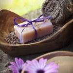 conjunto de naturaleza dayspa violeta — Foto de Stock   #12455376