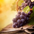Freshly harvested grapes — Stock Photo #12587138