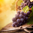Stock Photo: Freshly harvested grapes