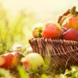 Organic apples in summer grass — Stock Photo #12588373