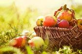 Organic apples in summer grass — Stock Photo