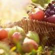 Stock Photo: Organic fruit in summer grass