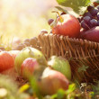 Organic fruit in summer grass — Stock Photo #12739501