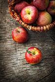 Nyskördade äpplen — Stockfoto