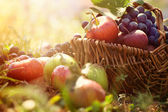 Organic fruit in summer grass — Stock Photo