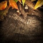 Autumn forest background — Stock Photo