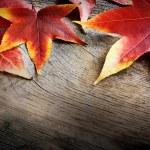 Autumn background — Stock Photo #13518040