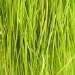 Grass texture — Stock Photo #13815891
