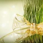 Christmas wheat — Stock Photo #16202989