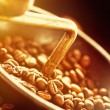 Coffe beans in the grinder - Stock Photo