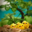Easter chicks - Stock Photo