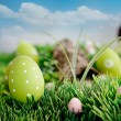 colorful easter — Stock Photo #22396117